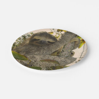 sloth 7 inch paper plate