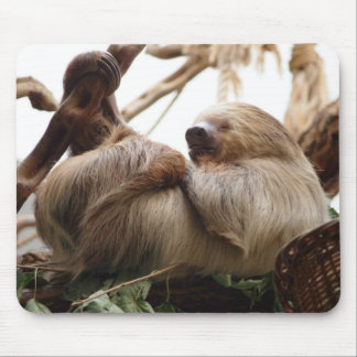 Sloth animal cute. mouse pad