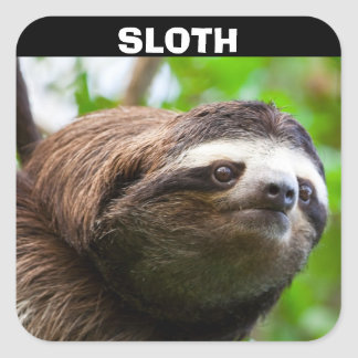 Sloth Face Square Sticker