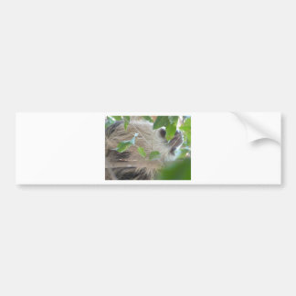 sloth in tree bumper sticker