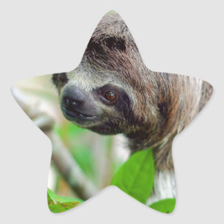 Sloth in tree Nicaragua Star Sticker