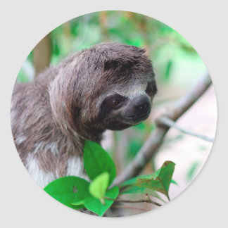 Sloth in tree Nicaragua Stickers
