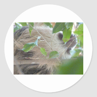 sloth in tree round stickers