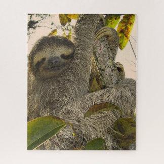 sloth jigsaw puzzle