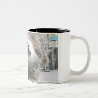 Sloth Mugs