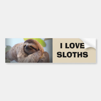 Sloth on tree bumper sticker