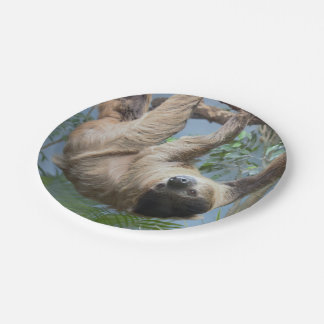 Sloth Paper Plates 7 Inch Paper Plate
