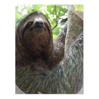 Sloth Photo Design Postcard