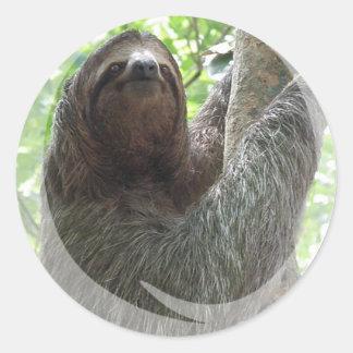 Sloth Photo Design Sticker