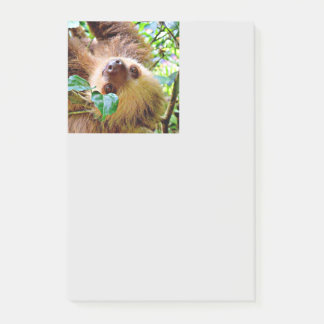 Sloth Post-it Notes