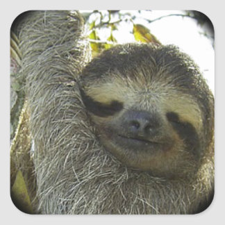 Sloth round mask square stickers