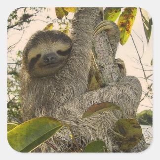 Sloth Stickers