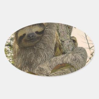 sloth oval sticker