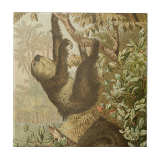 Sloths are Super Tile