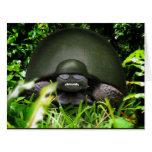 Slow Commando - Army Turtle Greeting Card