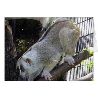 Slow Loris Descends Branch In Zoo Enclosure Card