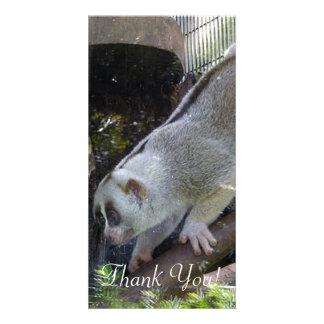 Slow Loris Descends Branch In Zoo Enclosure Custom Photo Card