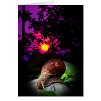 slow sunset card