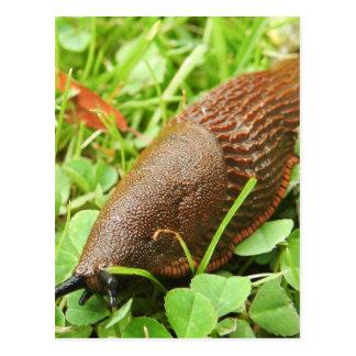 Slug Postcard
