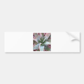 Small agave bumper sticker