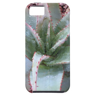 Small agave iPhone 5 cases