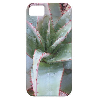 Small agave iPhone 5 covers