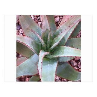 Small agave postcard