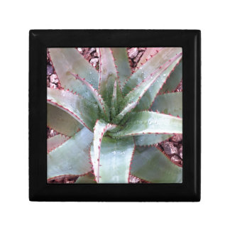 Small agave small square gift box