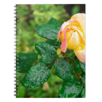 Small autumn rose with droplets notebook
