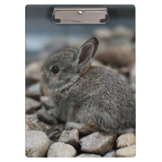 SMALL BABY BUNNY CLIPBOARDS