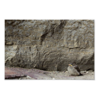 Small Bird, Large Rock Photo Print