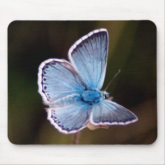 Small Blue Butterfly Mouse Pad
