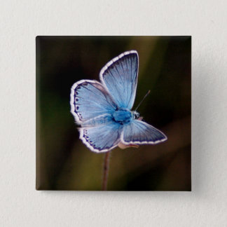 Small Blue Butterfly Square Pin