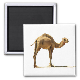 Small camel. magnet