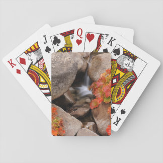 Small creek in autumn, California Playing Cards
