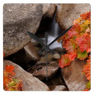 Small creek in autumn, California Square Wall Clock
