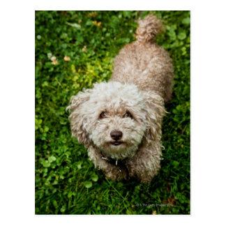 Small dog looking up at camera postcard