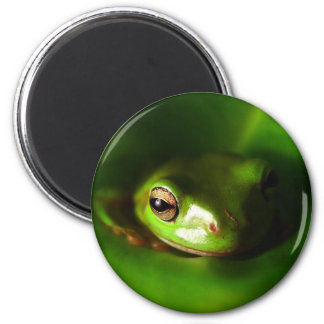 small green frog in green leaf 6 cm round magnet