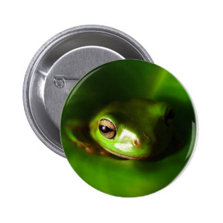 small green frog in green leaf buttons
