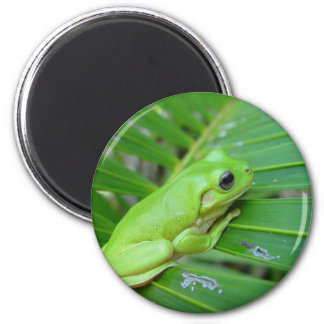 Small Green Frog Magnet