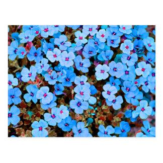 Small Lite Blue Flowers Postcard