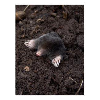 Small mole postcard