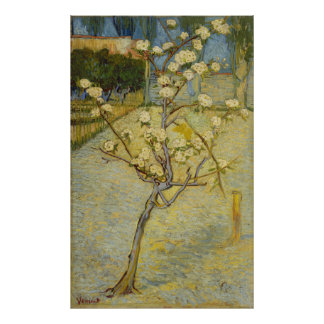 Small pear tree in blossom Poster