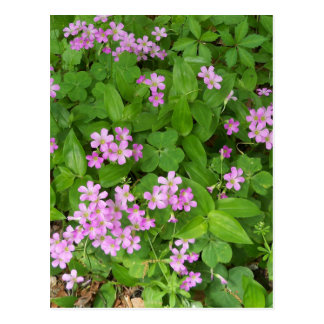 Small pink delicate wildflowers postcard
