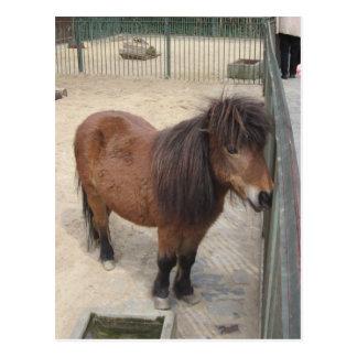 Small Pony Postcard