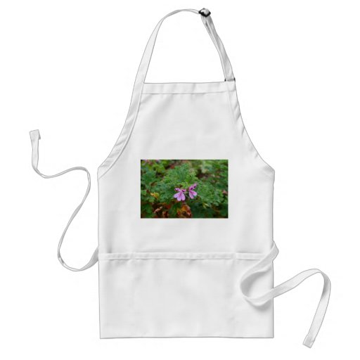 small purple flowers against green foliage plant apron