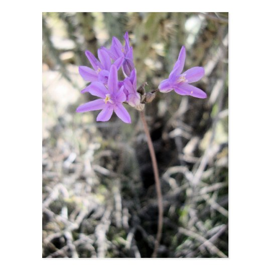 Small Purple Flowers Postcard