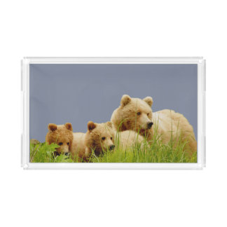 Small Rectangle Tray w/ grizzly bear family