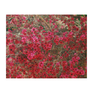 Small Red Flowers 2 Wood Canvas