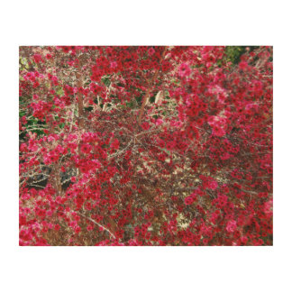 Small Red Flowers Wood Canvases